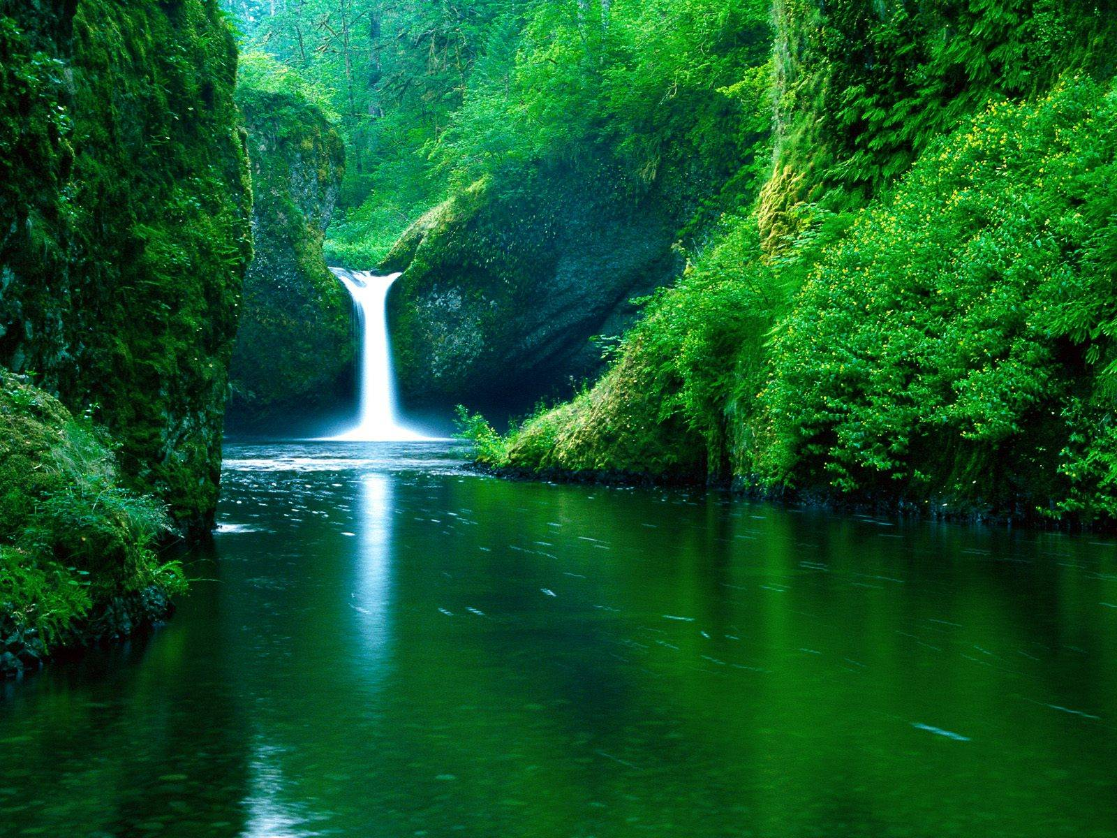 Wilderness and Waterfall