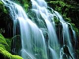 Sodden Moss, Proxy Falls