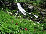 Wildflowers and Cool Waters, Mount Adams, Washington