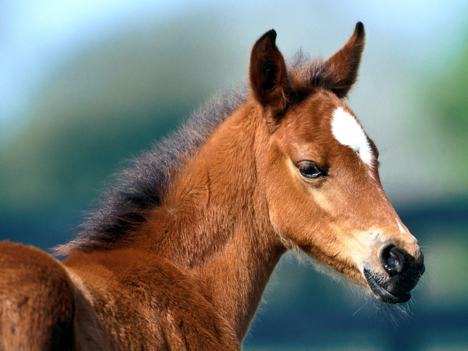 Horse And Foal Wallpaper